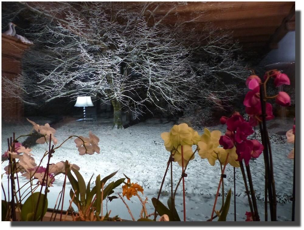 Comme je vous le disais je parle avec mes orchidées, et je leur joue du piano aussi. Ce soir je leur joue un nocturne de Chopin. J'aime beaucoup de n°1 opus 9 et ses variations de tonalités comme support de voyage pour l'imaginaire.