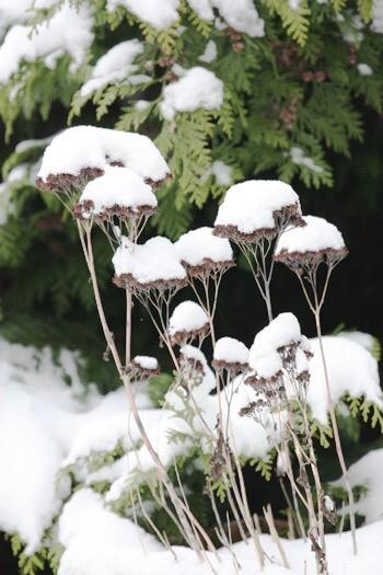 neige-05