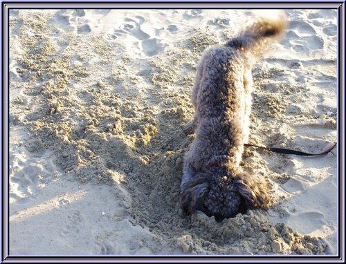 Suite de la balade à Meschers ........Titi Falcon à la plage