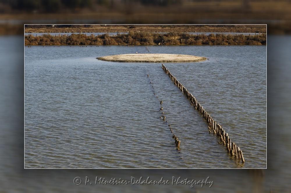 """Site naturel protégé """"Les Salines""""..."""