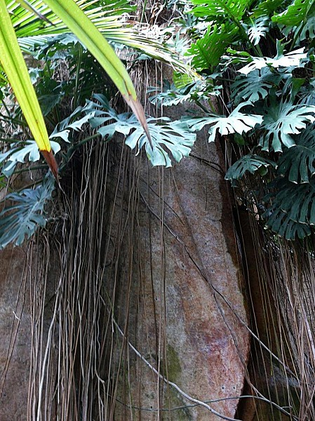Serre-tropicale-h.-Rocher-PARIS-336.jpg