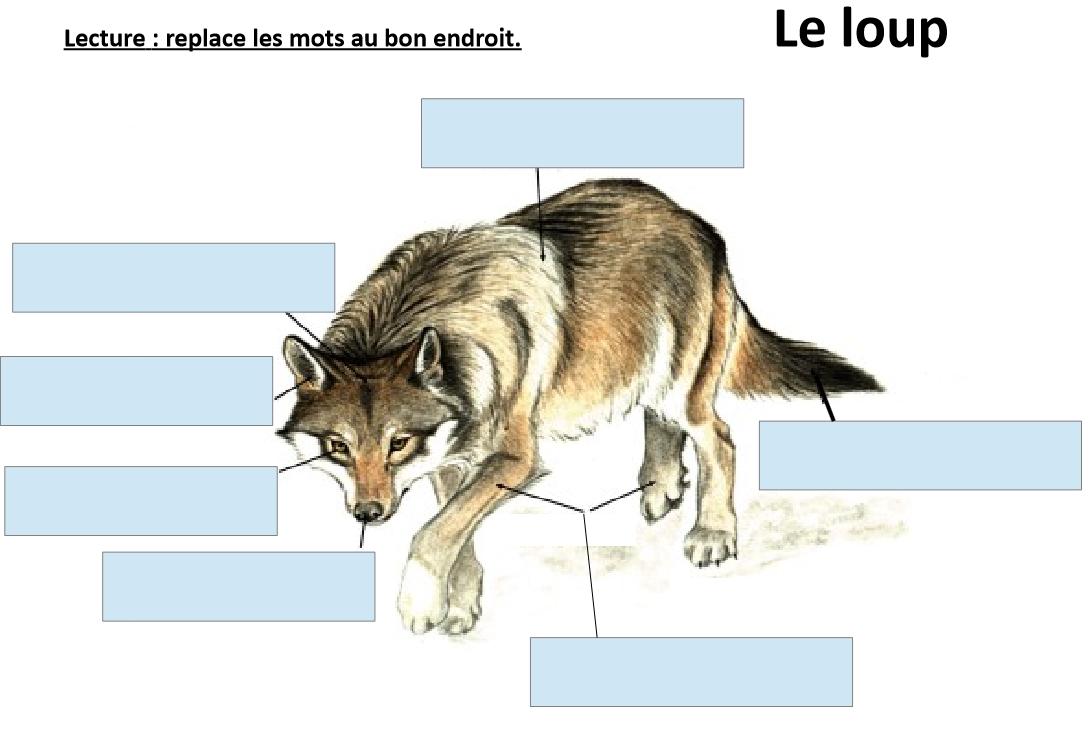 lecture exercice sur le loup le de la maitresse