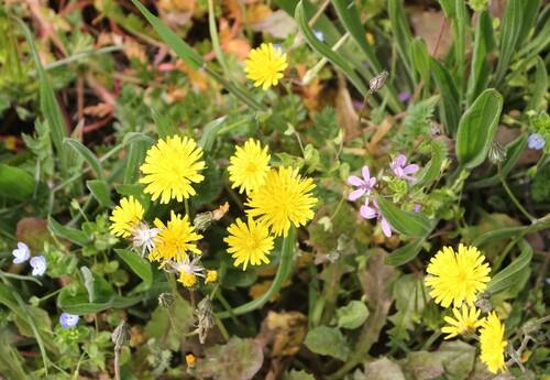 Fleurs des champs, 2