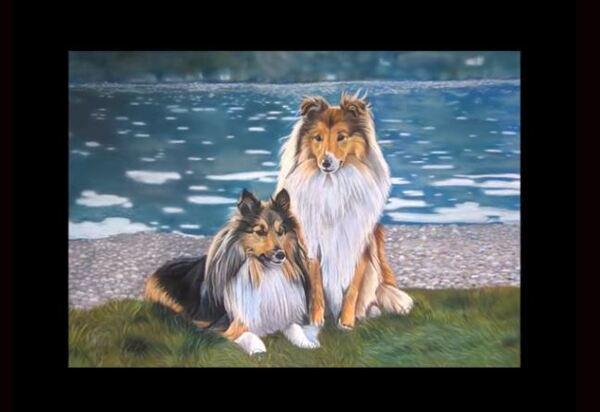 Dessin Dessin et peinture - vidéo 1851 : Comment peindre les chiens bergers des shetland aux pastels secs ?