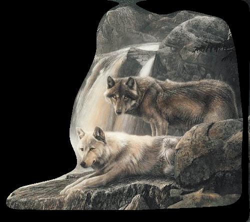 Tubes loups