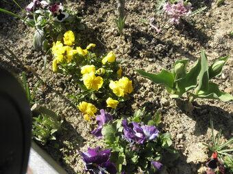 Le printemps arrive à grands pas