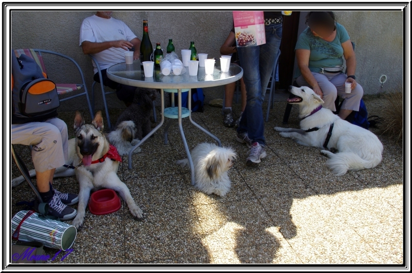 Cani marche du dimanche 04 août 2013