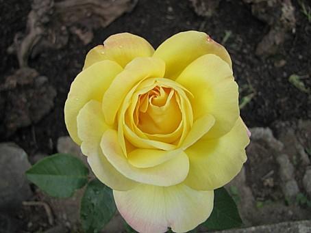 fleurs-5012.JPG
