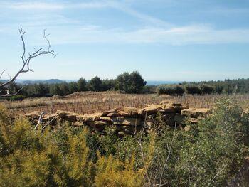 Terre viticole