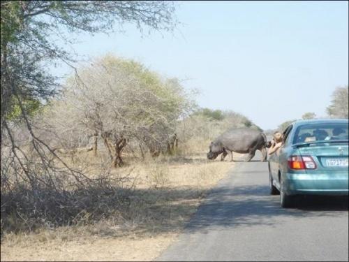 Safari : photos offertent de mon amie JPierre