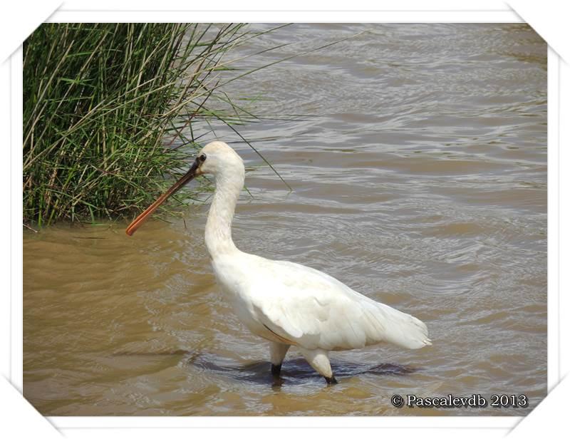 Symphonie printanière à la réserve ornithologique du Teich - 17/20