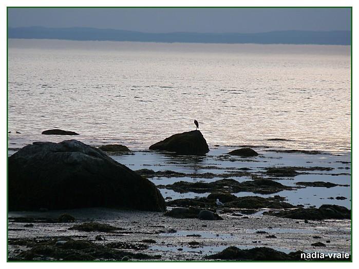 Photo 1er aout et avant 2010 133 GF