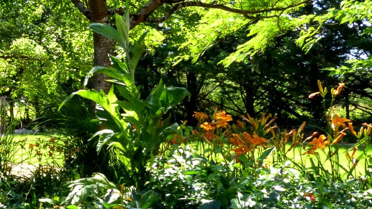 Au jardin de Marithé semaine 25/2013