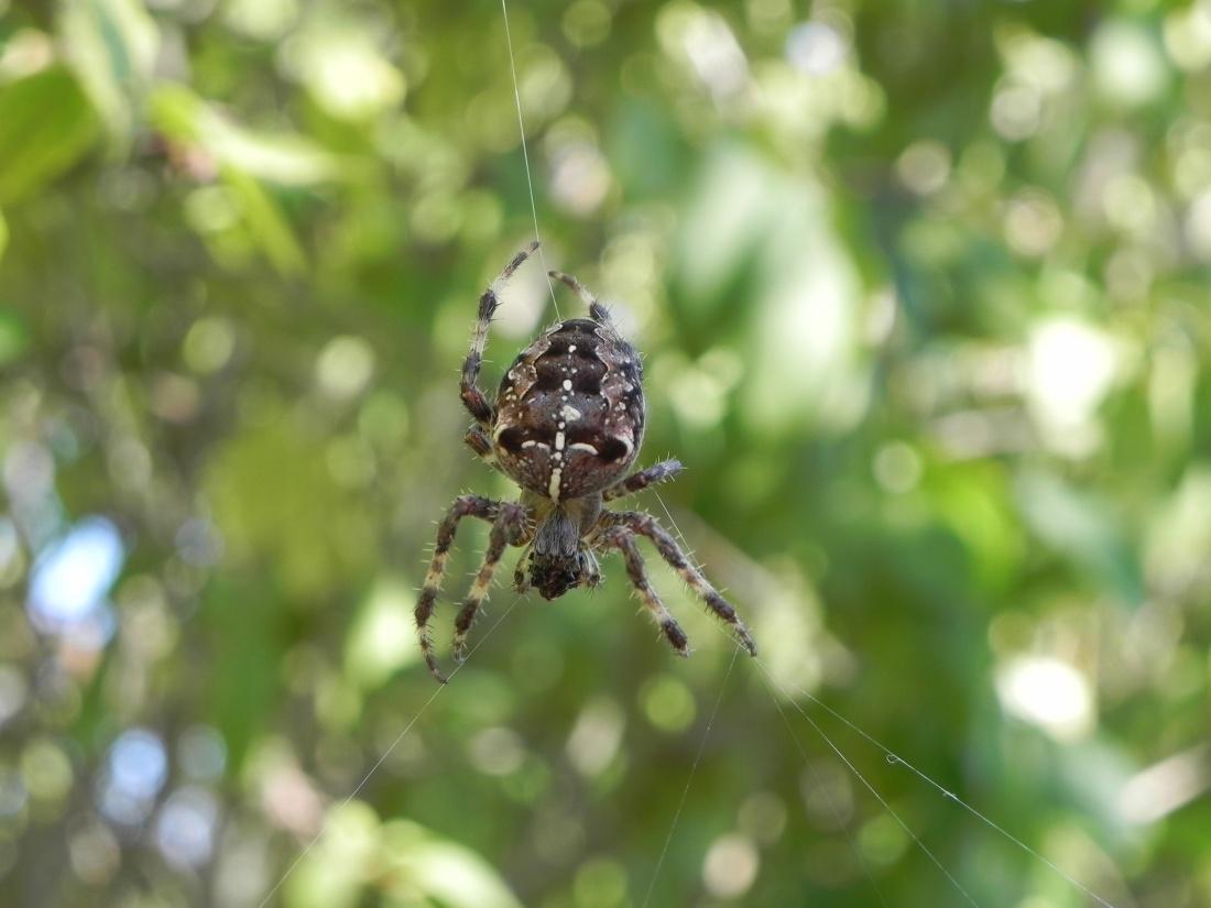Ma photo du jour : une araignée