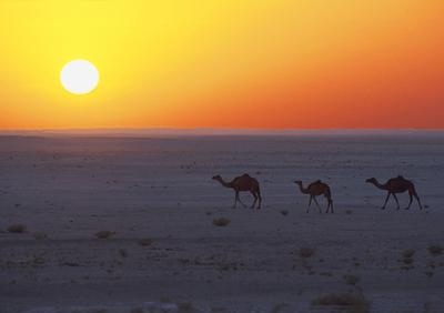 Blog de colinearcenciel :BIENVENUE DANS MON MONDE MUSICAL, Le Souflle du désert sur les chameaux