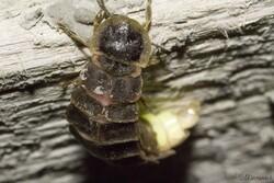 Galerie des coléoptères