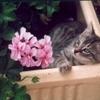bebes-animaux-orville-france-1243394354-1120607.jpg