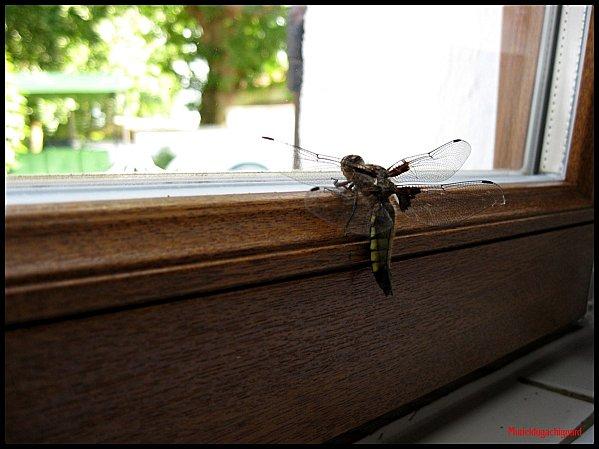 Insectes 1148 (Copier)