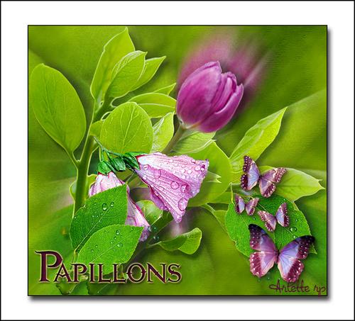 Fleurs diverses 2