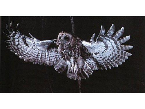 chouettehulotte - www.oiseauxd'europe.free.fr