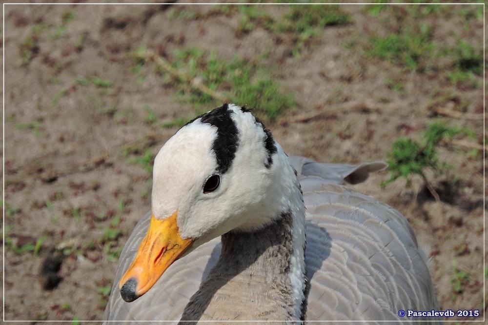 Zoo du Bassin d'Arcachon à La Teste - Août 2015 - 3/11