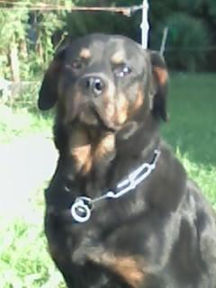 Rio, mon chien.