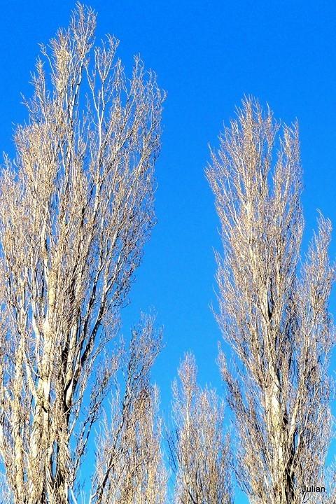 S02---Haut-d-arbre.JPG