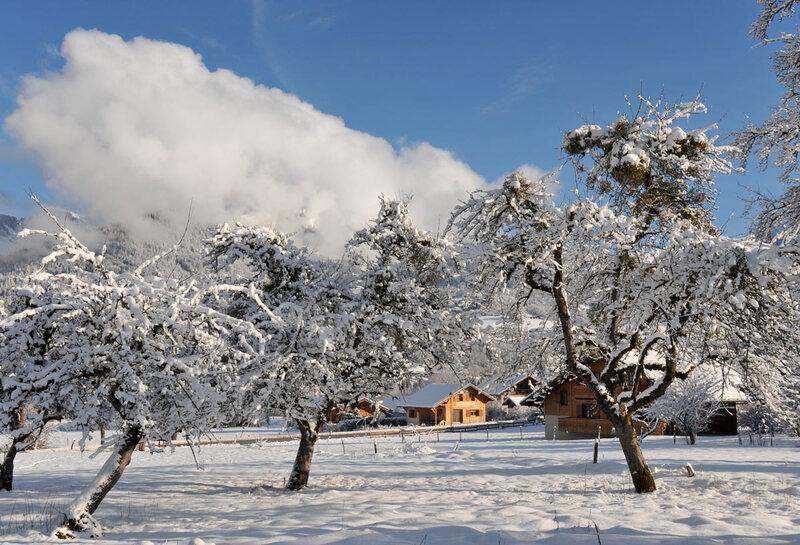 Morillon, saison du blanc (#2)