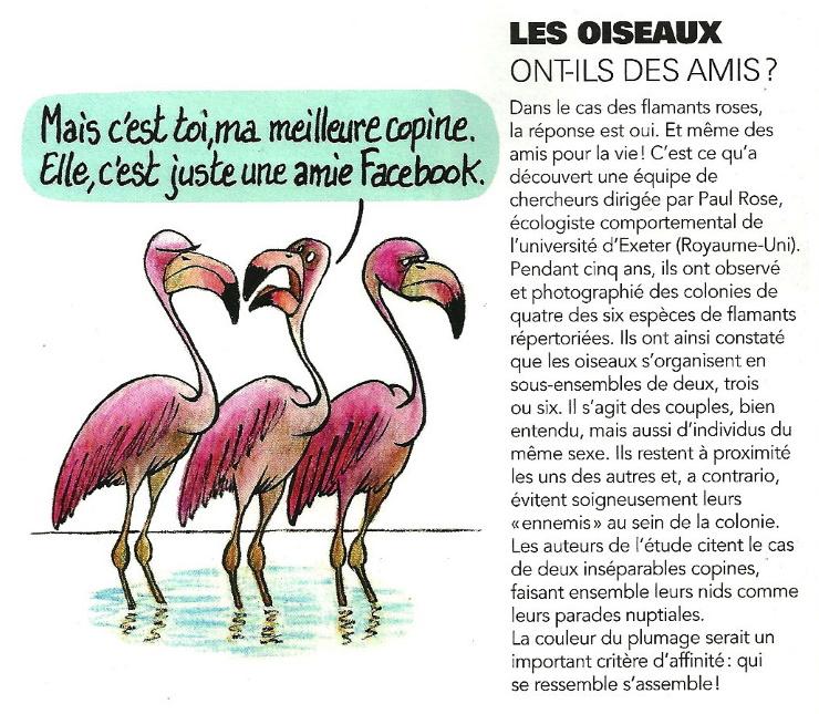 Oiseaux et amis...