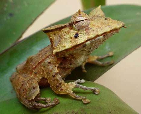 Des créatures très rares à travers le monde