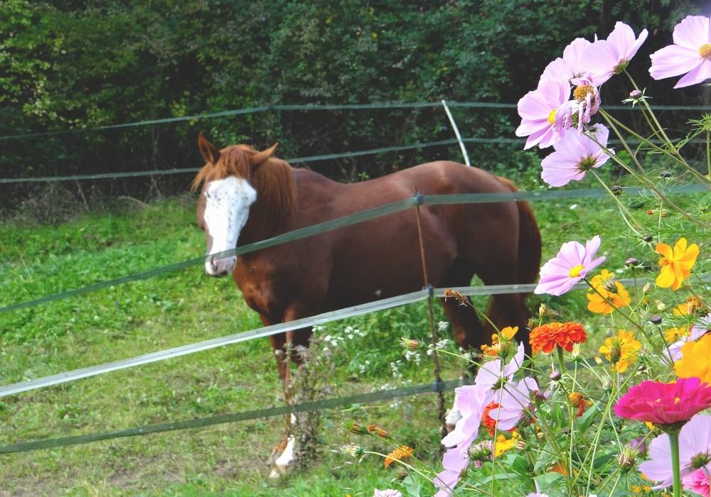 Mes dernières fleurs avec mon pensionnaire