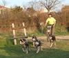 chiens de traineaux 4