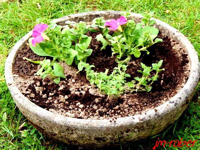 Jardin: Quand les jardinières et pots font leur Show pour une future scène florale