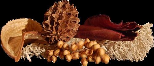 Vertus médicinales des plantes sauvages : Sauge