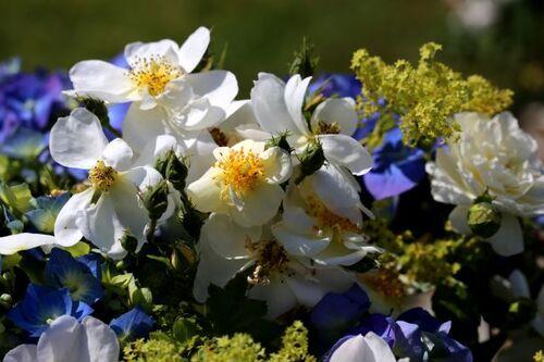 Les bouquets de Malmédy (2/3)