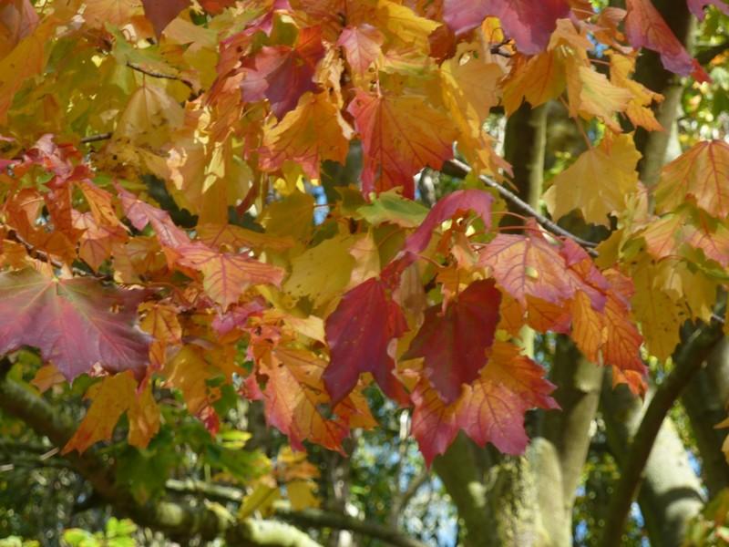 Couleurs d'automne ! ..