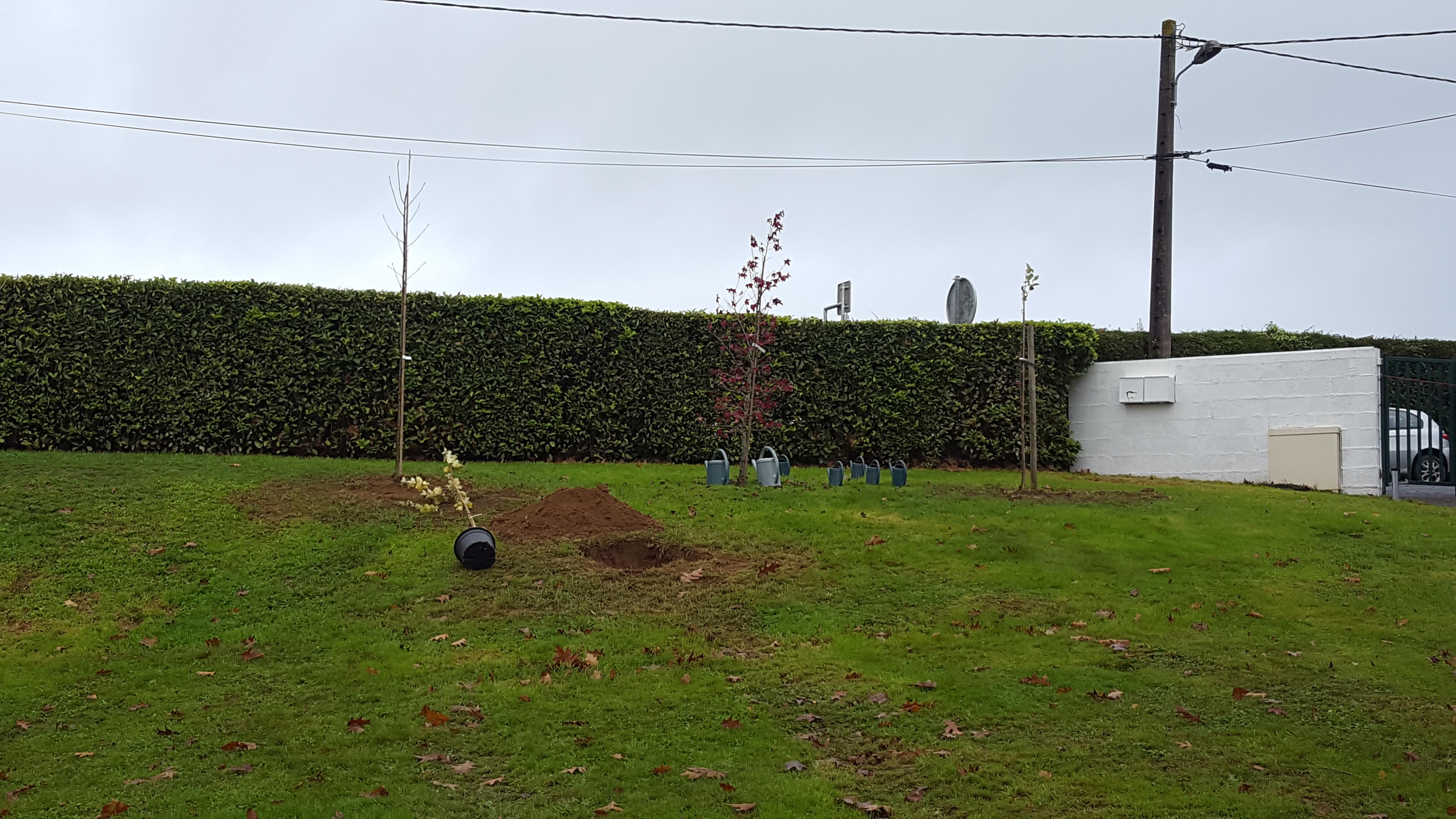 Plantation de l\'arbre du courage - La Classe de Douglas