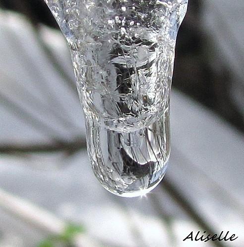 Goutte-glacee-2010---14.jpg