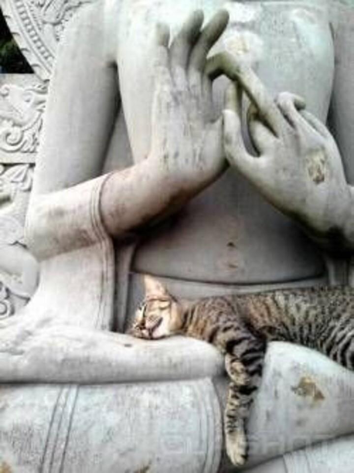 Chuuuut....Méditation en cours