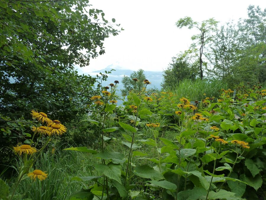 Le Jardin des Cimes - Plateau d'Assy (Haute - Savoie)