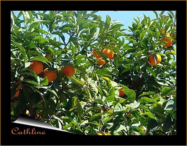 oranger 1