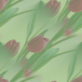 kit printemps 6