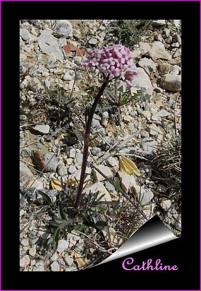 plante-a-identifier.jpg