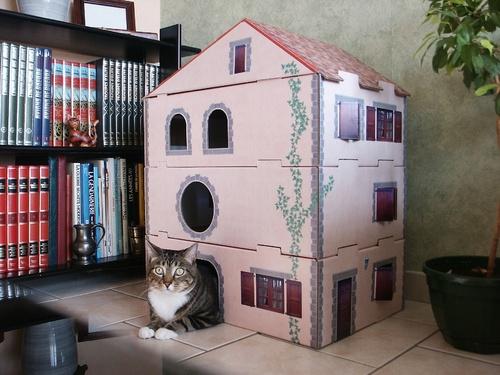 rubrique magasin des chats