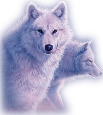 Loups 1