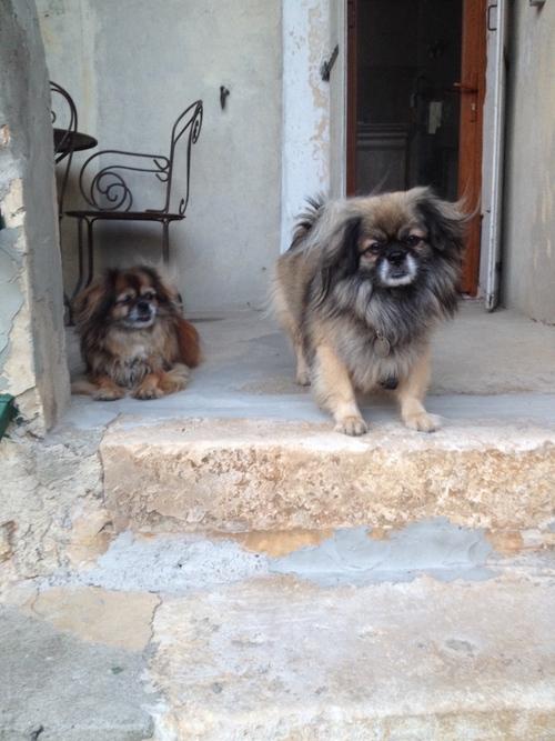 Labastide de Virac  Akira et Tsuru