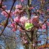 déébut du printemps