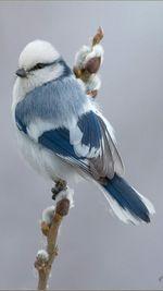 Créas Oiseaux