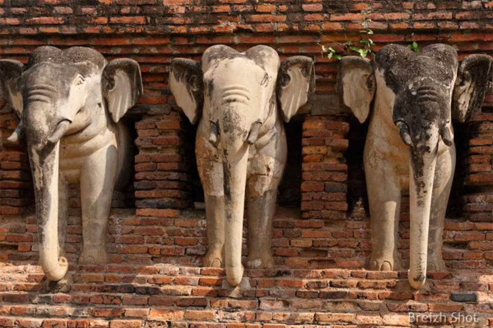 Wat Sorasak Sukhothaï - Trio d'éléphants