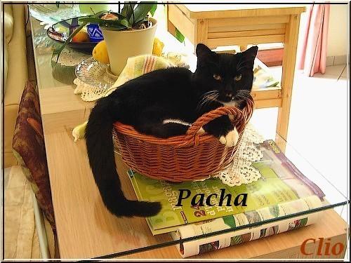 PACHA 13 OCTOBRE 2009 R NOM